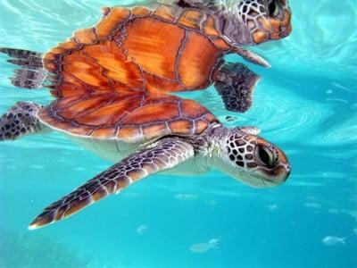 Animales de las playas de Tahití