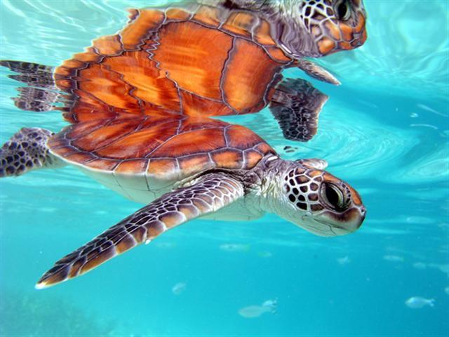 Animales de las playas de Tahiti