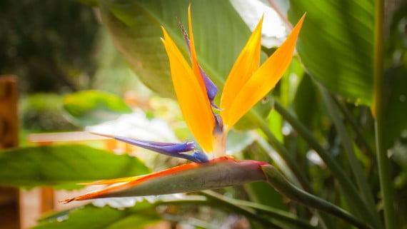 Bird from paradise