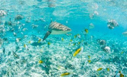 Bucea en Bora Bora