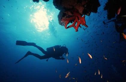 Bucea en Mar Rojo