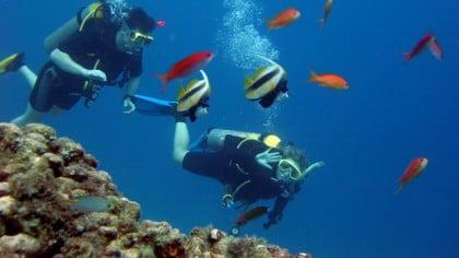 Bucea en Tailandia