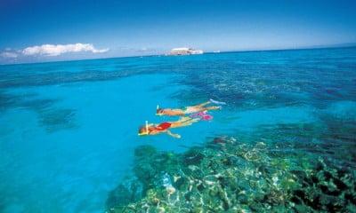 016691Snorkelling - Hardy Reef, Great Barrier Reef