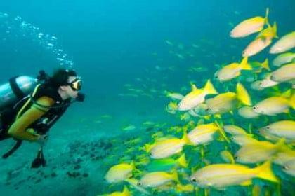 Bucear en Tailandia