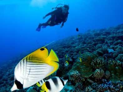 Buceo en Bora Bora