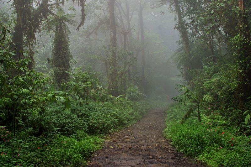 Camino en Monteverde