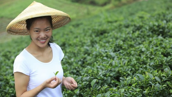 El cultivo de té verde en China