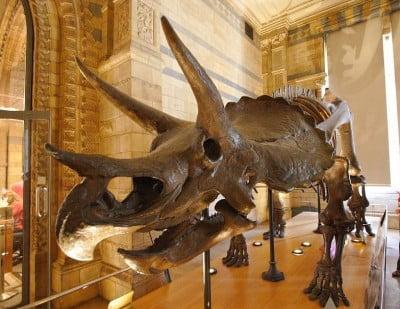 Esqueletos en el Museo de Historia Natural