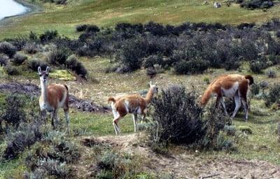 Fauna en La Patagonia