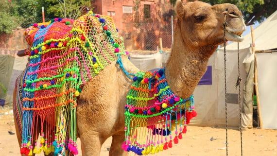 Feira dos camelos de Pushkar