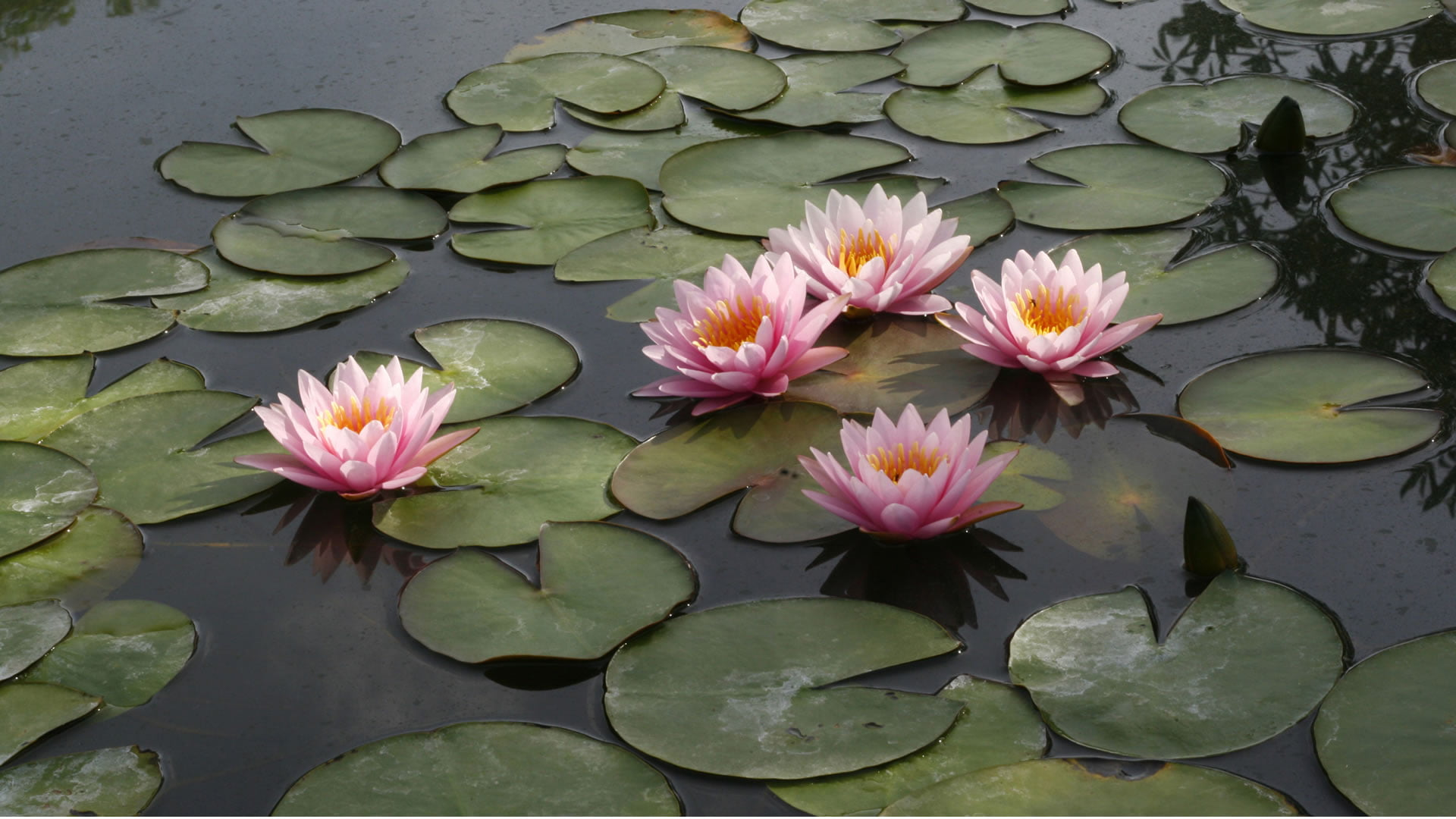 Cuáles Son Las Flores Más Bonitas Del Mundo Nombres Y Fotos