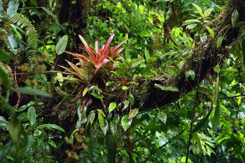 Flora exótica de la selva