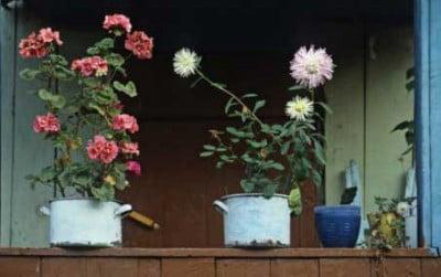 Flores para rusos