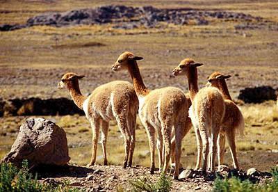 Guía de viaje de Arequipa