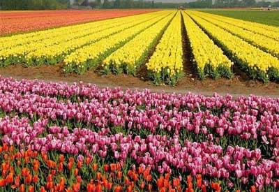 Holanda de primavera