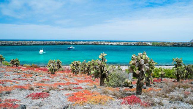 Isla Plaza Sur, Galápagos, Ecuador
