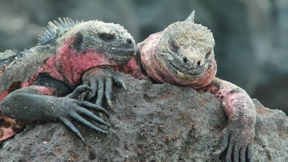 Visita Ecuador: as illas Galápagos