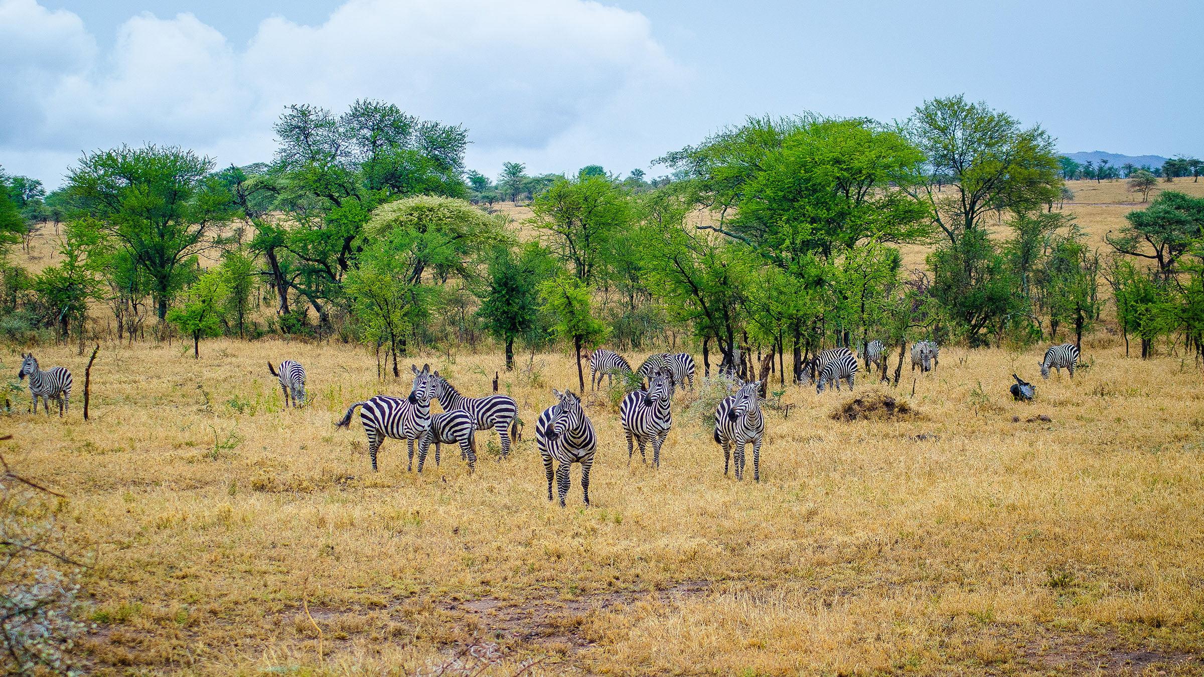 la sabana en el parque nacional serengueti tanzania