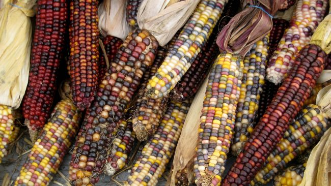 Modalidades de maíz en América Central