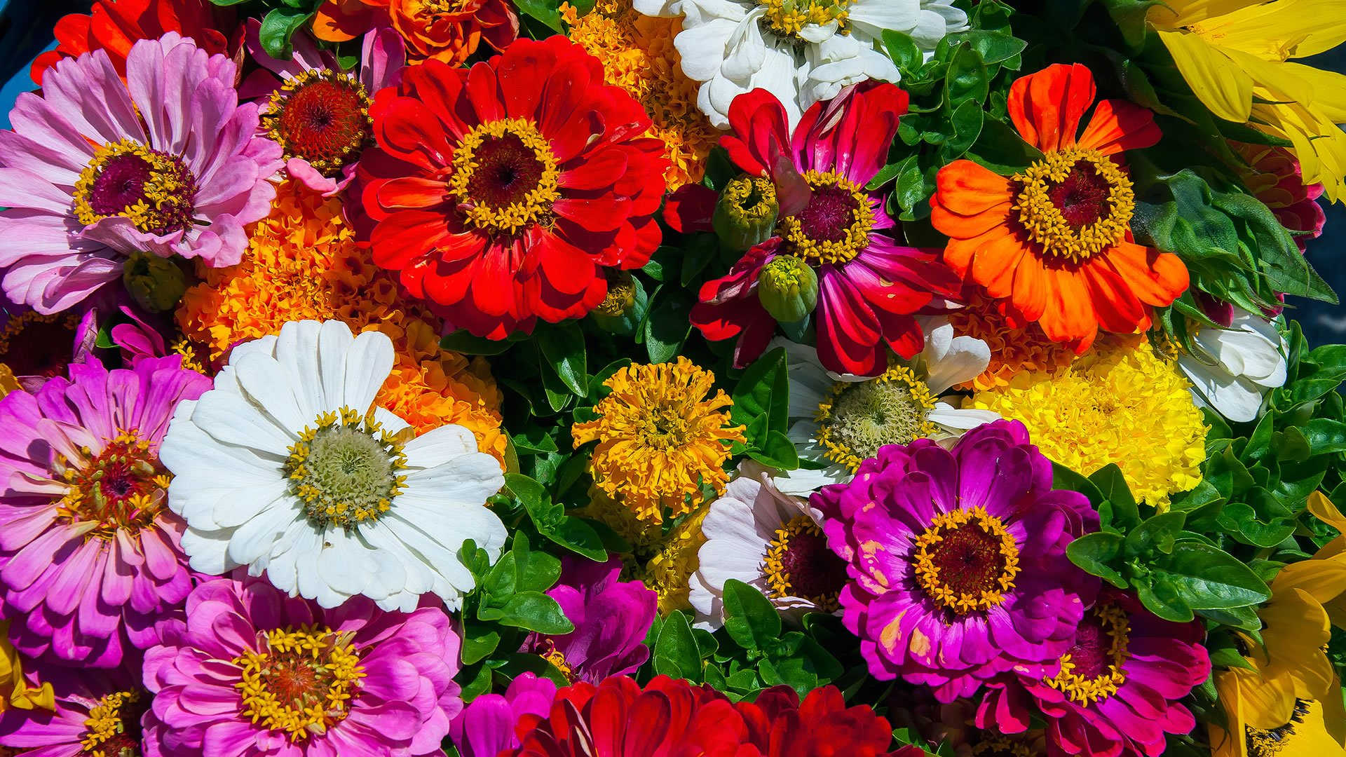 País de origen de las flores más bonitas del mundo