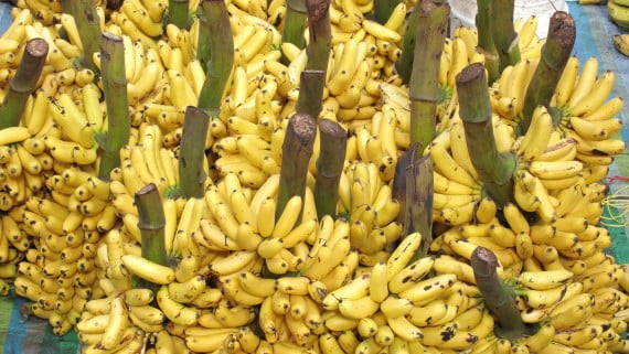 Banana production in Ecuador