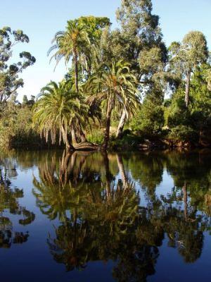 Plantas de los Jardines Botánicos de Melbourne