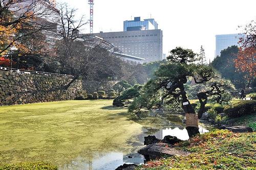 Primavera en Tokio