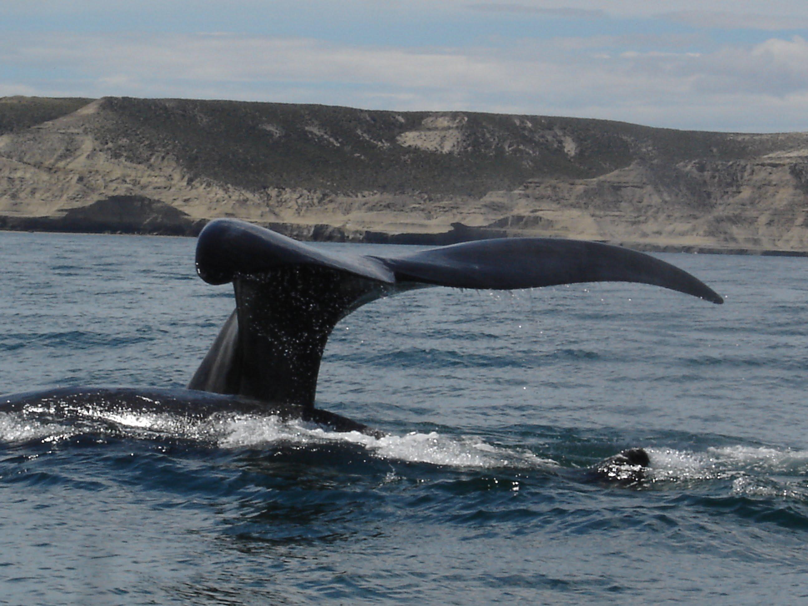 Puerto Madryn - Argentina