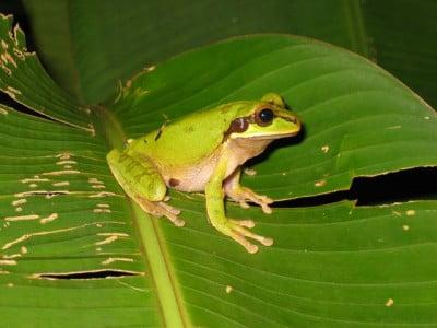 La fauna costarricense
