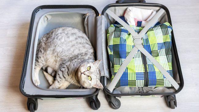 Viajar a Perú con mascota