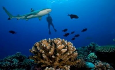 Submarinismo en Polinesia