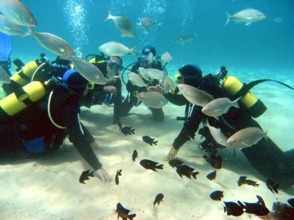 Submarinismo en canarias