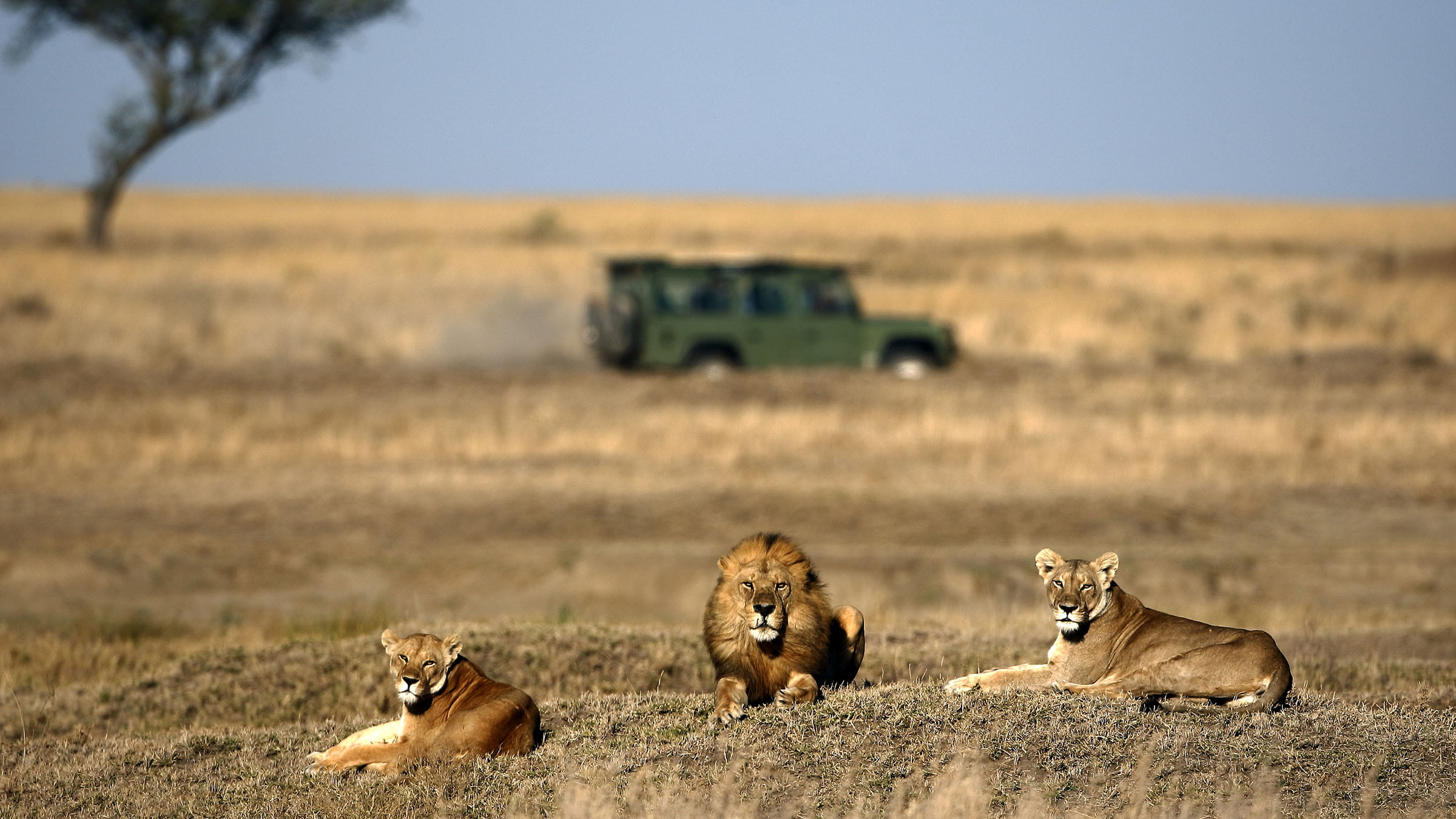 Temporada de safari