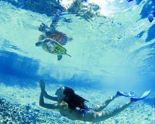 Tortuga en Bora Bora