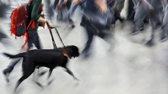 Transporte de animales en Ryanair