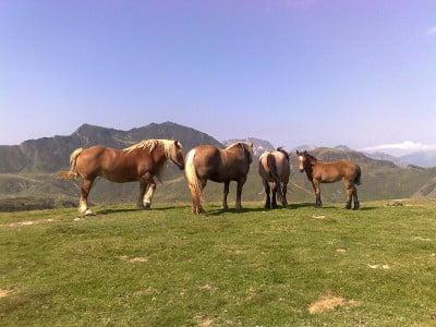 Turismo rural por Navarra