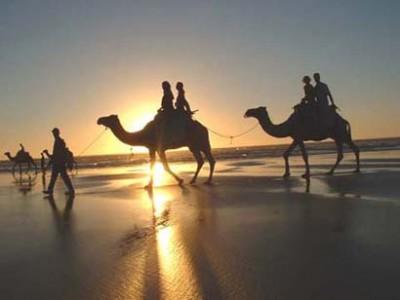 camellos en una playa