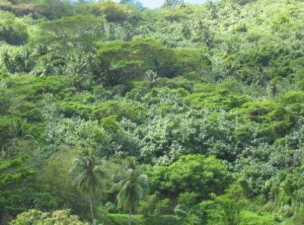 Vegetacion de Bora Bora