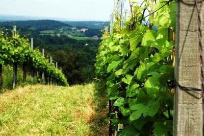Vinedos de Viena