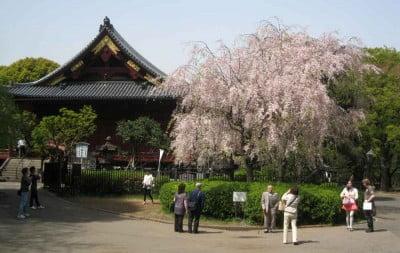 Visita al Parque Ueno