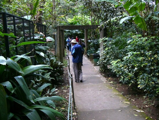 Caminata por el Zoológico de  San Jose