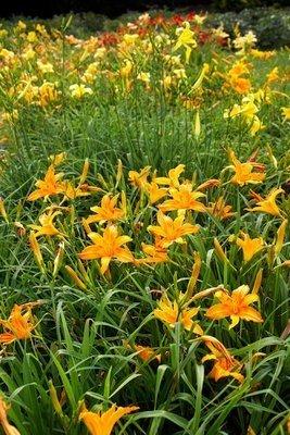 actividades por la naturaleza botánica