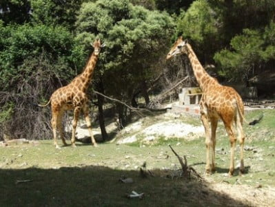 aitana el safari