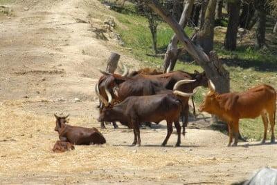 aitana safari