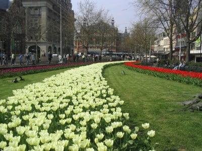 Tulipanes de Ámsterdam