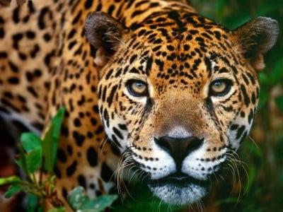 animales río Amazonas