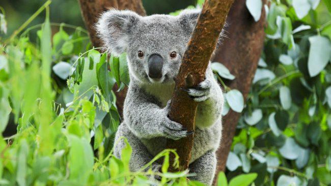 Australia: un destino exótico e interesante