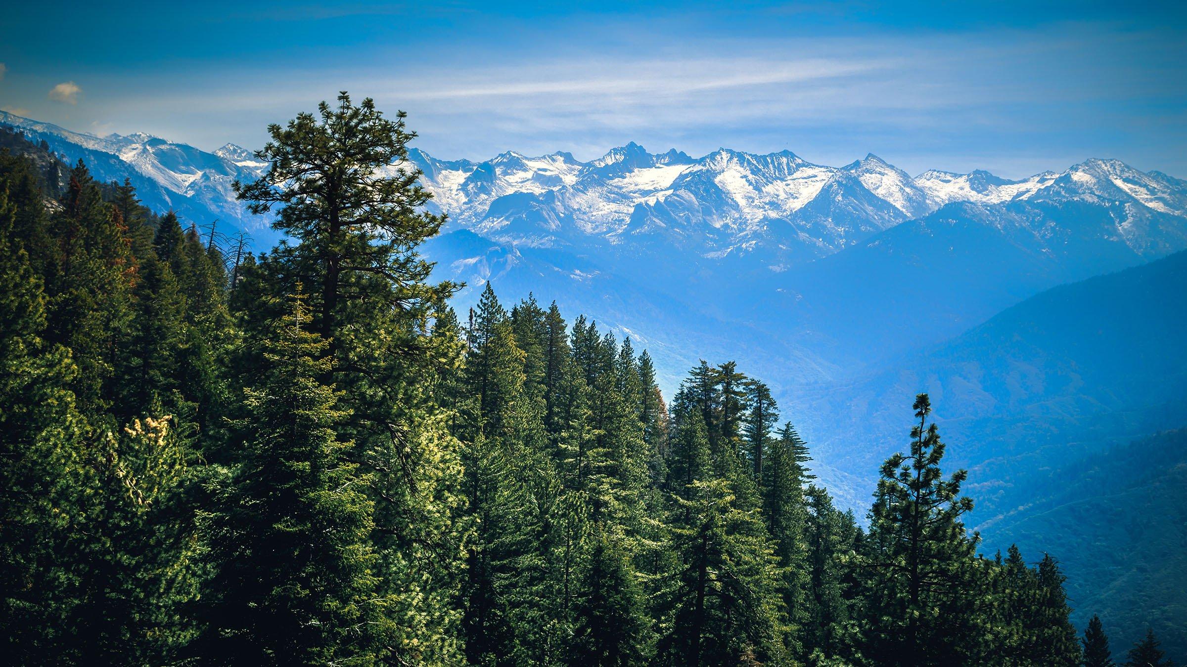 Bioclimático Bosques en California, Estados Unidos.