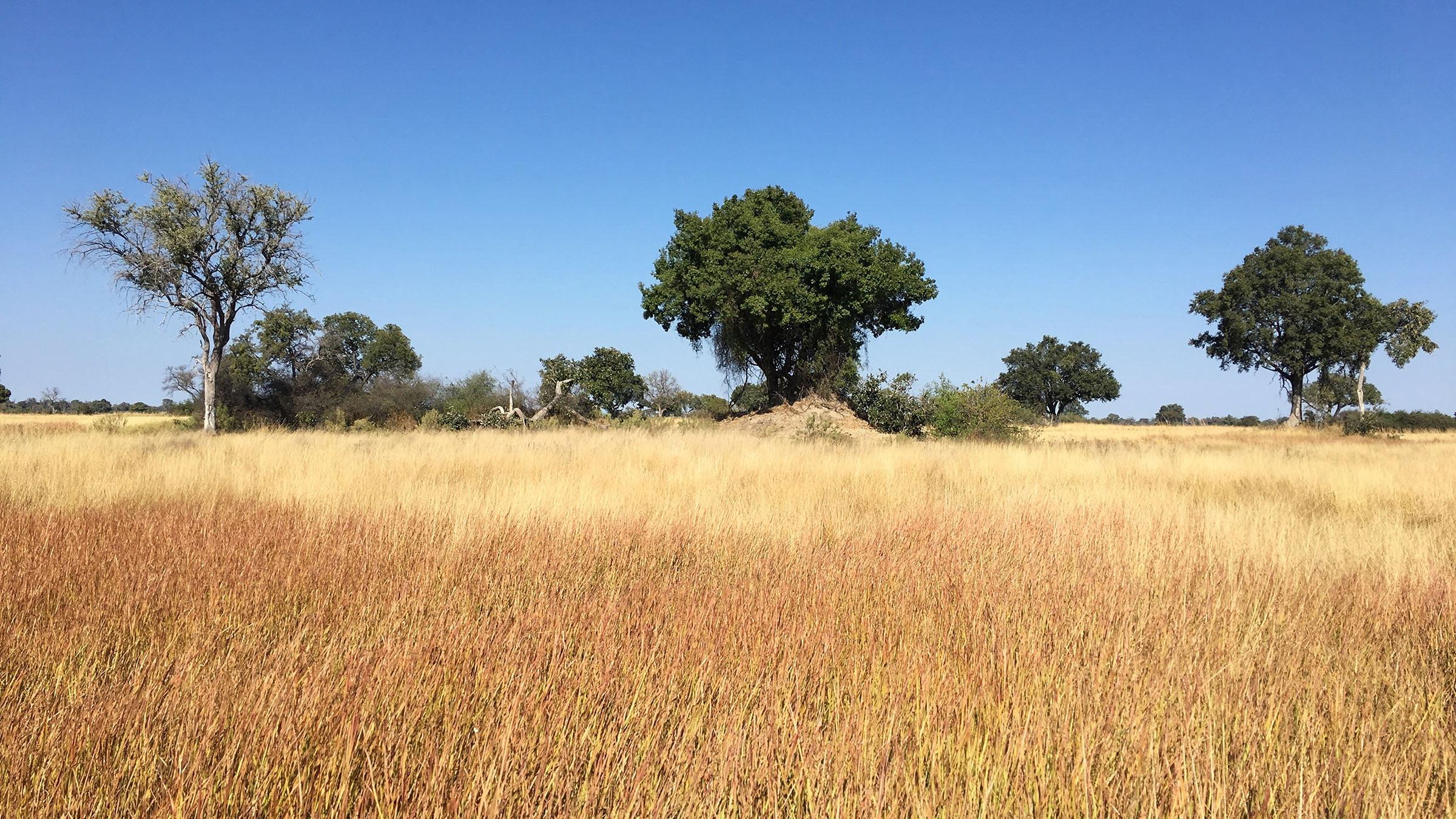 Bioclimático La Sabana, Botswana, África