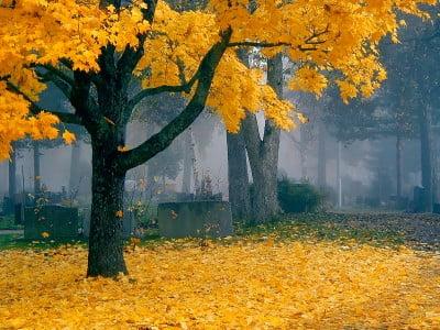 Bosque de Finlandia